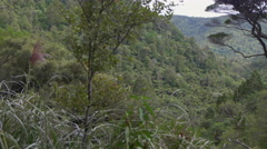 View of trees in forest, Auckland, North Island, New Zealand Stock Footage