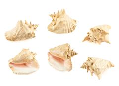 Seashell isolated over the white - stock photo