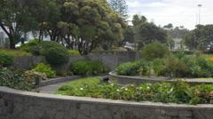 Botanical garden in Napier, New Zealand Stock Footage