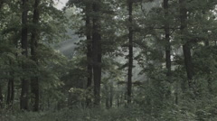Forest / Woods in Romania 4 -Cine Gamma- Stock Footage