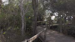 Tourists walking through wooden bridge in Fausto Llerena Breeding Center, Santa Stock Footage