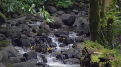Stream flowing through rocks in Papeete, Tahiti, French Polynesia - stock footage