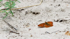 Beautiful yellow butterfly sitting on the ground Stock Footage