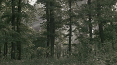 Forest / Woods in Romania 4 -Graded- Stock Footage