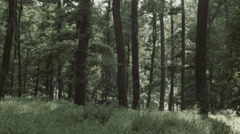 Forest / Woods in Romania 3 -Graded- Stock Footage