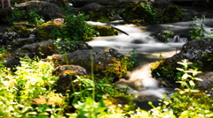 Close-up of stream flowing through Black Butte, Oregon, United Sates Stock Footage