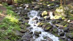 Mountain stream in the forest. UHD steadycam 4K stock footage Stock Footage