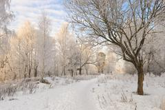 winter forest landscape in good weather - stock photo