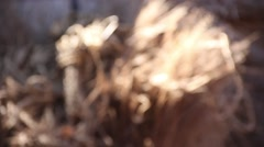 Grass braids - stock footage