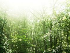 Sunlight beaming through treetops Stock Photos