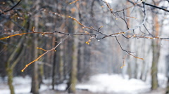 winter snowstorm in the woods - stock footage