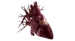 Human Heart rotation on white background Stock Footage