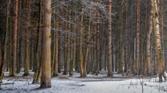 snow in the forest - stock footage