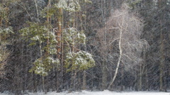 dark mixed forest and blizzard - stock footage