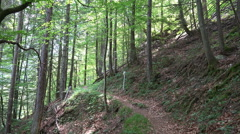 Small pathway in Austria alps mountain forest Stock Footage