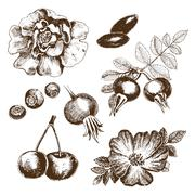 Berries collection. - stock illustration