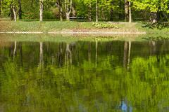 row of green trees - stock photo