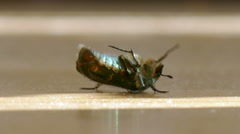 A beetle on the ground Stock Footage
