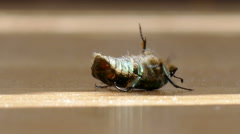 a beetle lying on the floor - stock footage
