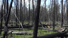 Yellowstone NP fire destroyed forest pan 4K 040 Stock Footage
