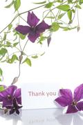 beautiful blooming clematis - stock photo