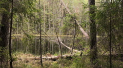 Lake in the thick forest (slider shot) Stock Footage