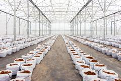preparation coco peat in greenhouse  for cultivation vegetable - stock photo
