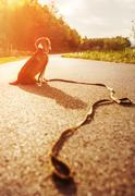 Lost dog sitting on the road alone Stock Photos