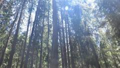 Walking through rainforest, hiker pov, Ecuador. UHD steadycam 4K stock footag Stock Footage