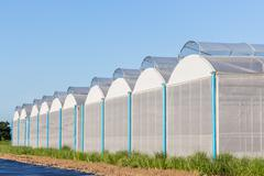 View for greenhouse with blue sky and field agriculture Stock Photos