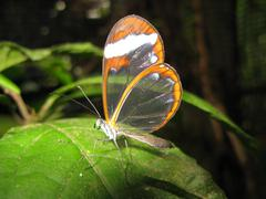 Transparent butterfly wings - stock photo