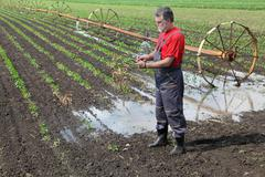 Agricultural scene, farmer in paprika field with watering system - stock photo