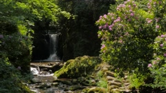 Idyllic forest scenery with creek and cascades #13 Stock Footage