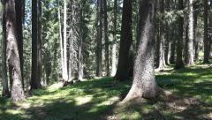 Walking through Forest Meadow. UHD steadycam 4K stock footage Stock Footage