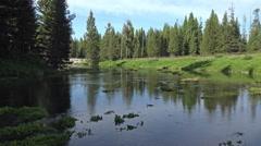 Big Springs Island Park Idaho nature 4K - stock footage