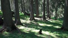 Walking pov through Forest Meadow. UHD steadycam 4K stock footage Stock Footage