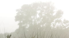 Foggy day Stock Footage