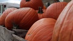Stock Video Footage of Pumpkins in crate