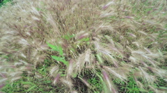 Cultivating of grass hay Stock Footage