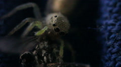 Tiny Spider and Mosquito Extreme Close Up Stock Footage