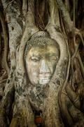 Ancient Buddha Entwined Within Tree Roots in Thailand Stock Photos