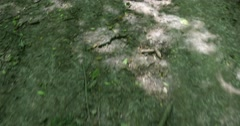 Walking On Forest Trail 4k Stock Footage