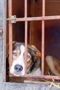 Dog behind bars Kuvituskuvat