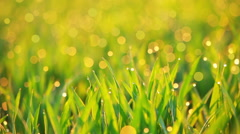 Morning Dew on the Grass and Flying Particles Stock Footage