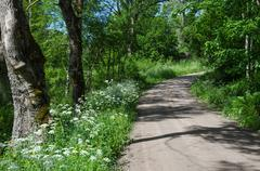 Gravel road with summer feeling Stock Photos