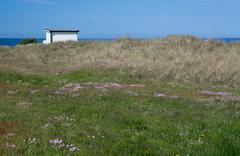 Fisherman's house and yellow wildflowers Stock Photos