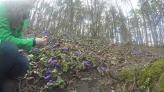 Girl gather hepatica on edge of forest on sunny early spring. 4K Stock Footage