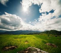 Green rice field with rocks at sunny day Stock Photos