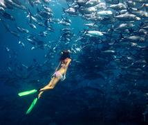 Young lady diving by the school of Jack fish on the single breath Stock Photos