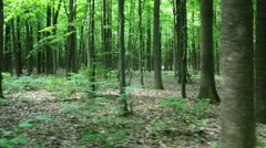 Walking On Forest Trail - stock footage